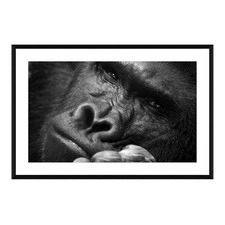 Gorilla Thoughts Framed Printed Wall Art