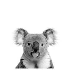 Oh Hi Koala Photographic Art Print