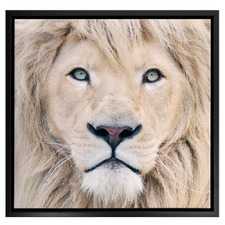 Lion King Photographic Printed Wall Art