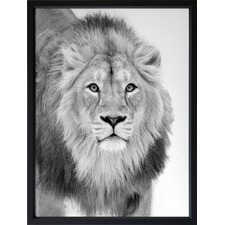 Lion Hunt Framed Print