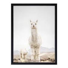 No Drama Llama Framed Print