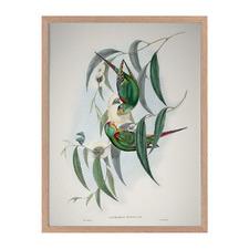 Swift Parrot Framed Printed Wall Art