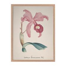 Crimson Cattleya Framed Printed Wall Art