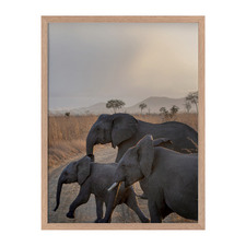 Elephants On Parade Framed Printed Wall Art