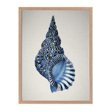 Indigo Conch I Framed Printed Wall Art