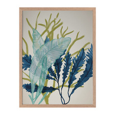 Dart Reef Framed Printed Wall Art