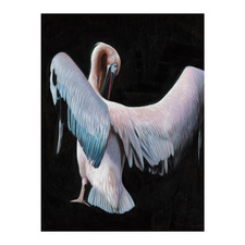 Pelican Canvas Wall Art