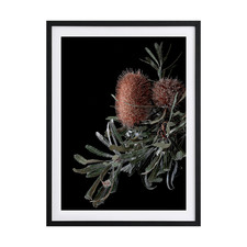 Wild Banksia Framed Printed Wall Art