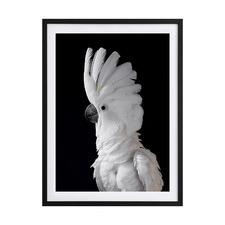 White Cockatoo I Framed Printed Wall Art