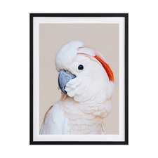 Salmon Crested Cockatoo Framed Printed Wall Art