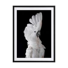 White Cockatoo II Framed Printed Wall Art