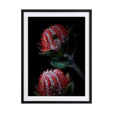 Banksia Coccinea Framed Printed Wall Art