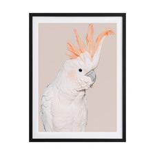 Cockatoo Tango Framed Printed Wall Art