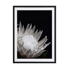 White Protea Framed Printed Wall Art
