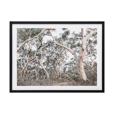 Gum Tree Forrest Framed Printed Wall Art