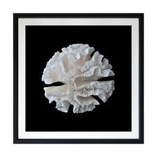 White Coral I Framed Printed Wall Art