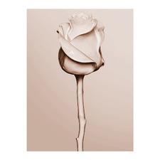 Rosewater Canvas Wall Art