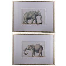 2 Piece Elephant Framed Print Set