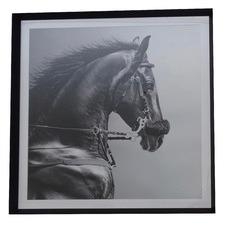 Equine Pride Framed Print