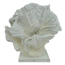 Coral Decor on Acrylic Base