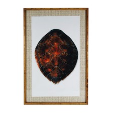 Turtle Shell Framed Paper Print