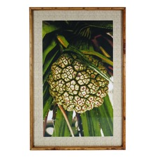 Pandanus Nut Framed Paper Print
