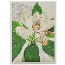 Magnolia Bloom Printed Wall Art