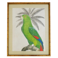 Parrot Framed Printed Wall Art
