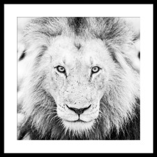 Lion Framed Printed Wall Art