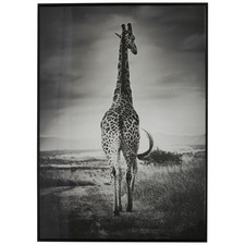 Giraffe Roaming Wall Art