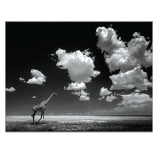 Head In The Clouds Photographic Art Print