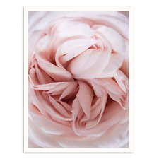 Cabbage Rose Printed Wall Art