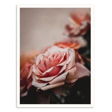 Warm Rose Printed Wall Art