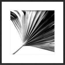 Black And White Palms II