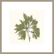 Seaweed Collection III Framed Print