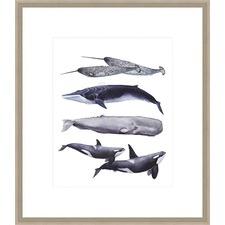 Whale Stack II Framed Print