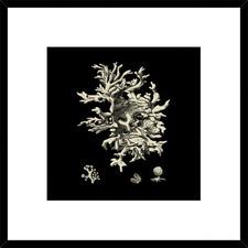 Black & Tan Coral III Framed Print