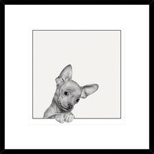 Sweet Chihuahua Framed Print