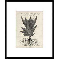 Thornton Succulents I Framed Print