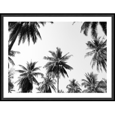 Coconut Palm Trees Framed Print
