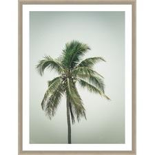 Coconut Palm Tree IV Framed Print