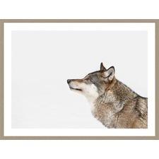 Grey Wolf Profile Framed Print