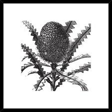 Vintage Style Banksia Framed Print