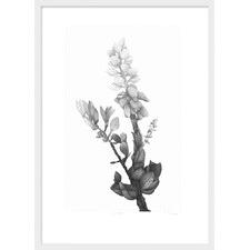 In Bloom Etching Framed Print