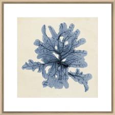 Coastal Seaweed IV Framed Print