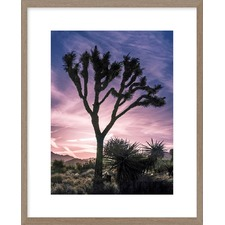 Views of Joshua Tree VII Framed Print
