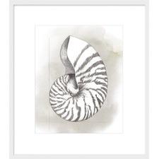 Shell Diagram III Framed Print
