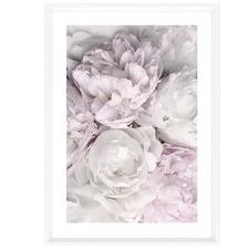 Peony Bloom Framed Printed Wall Art