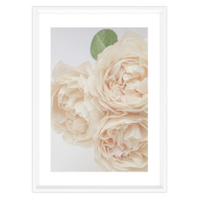 Unforgettable Rose Framed Printed Wall Art