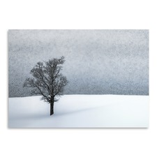 Lonely Tree Idyllic Winter Print